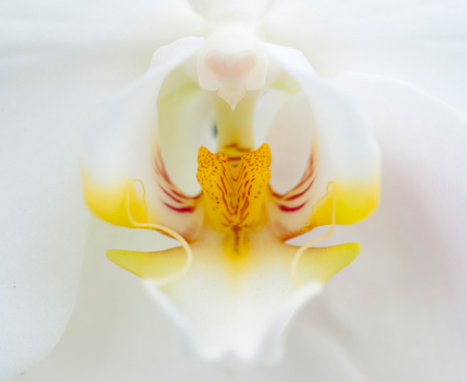 orchidee Florious orchids